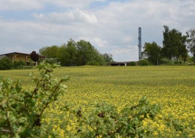 Rapsfeld vor Schießplatz